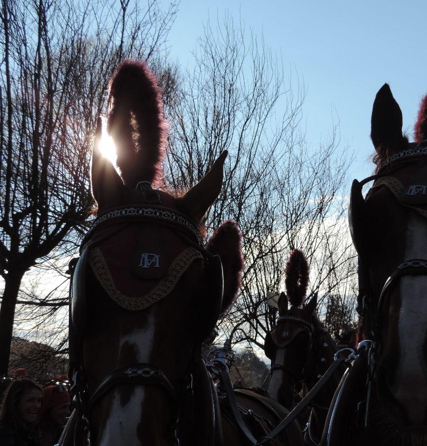 cavalli-carnevale-ivrea